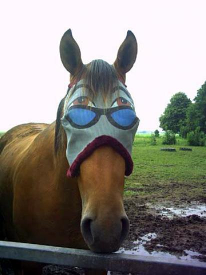 cheval classe